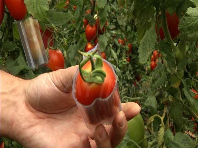 Фигурные формы выращивания для овощей 734